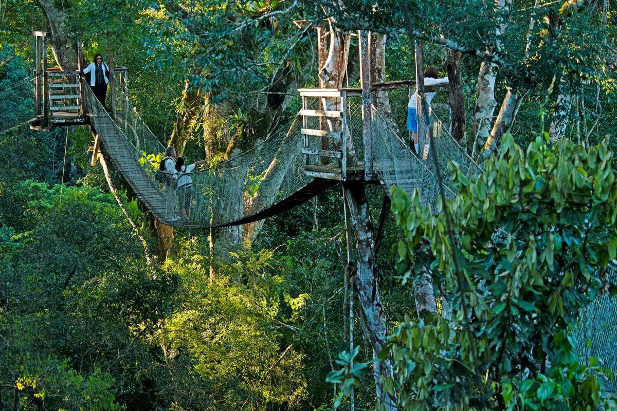 JUNGLE CANOPY ADVENTURE & Canopy Walkaway - Reserva Amazonica