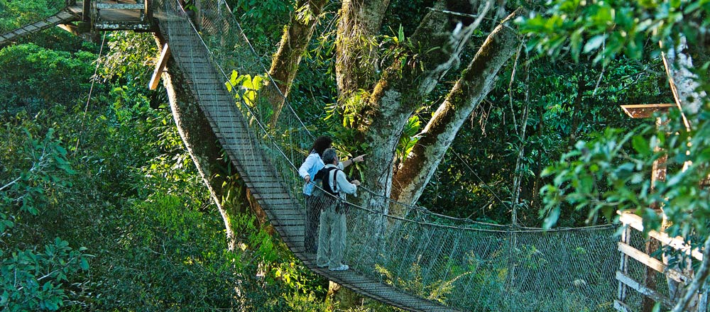 JUNGLE CANOPY ADVENTURE & Canopy Walkaway - Reserva Amazonica