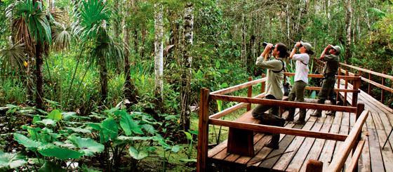Lodges en Tambopata