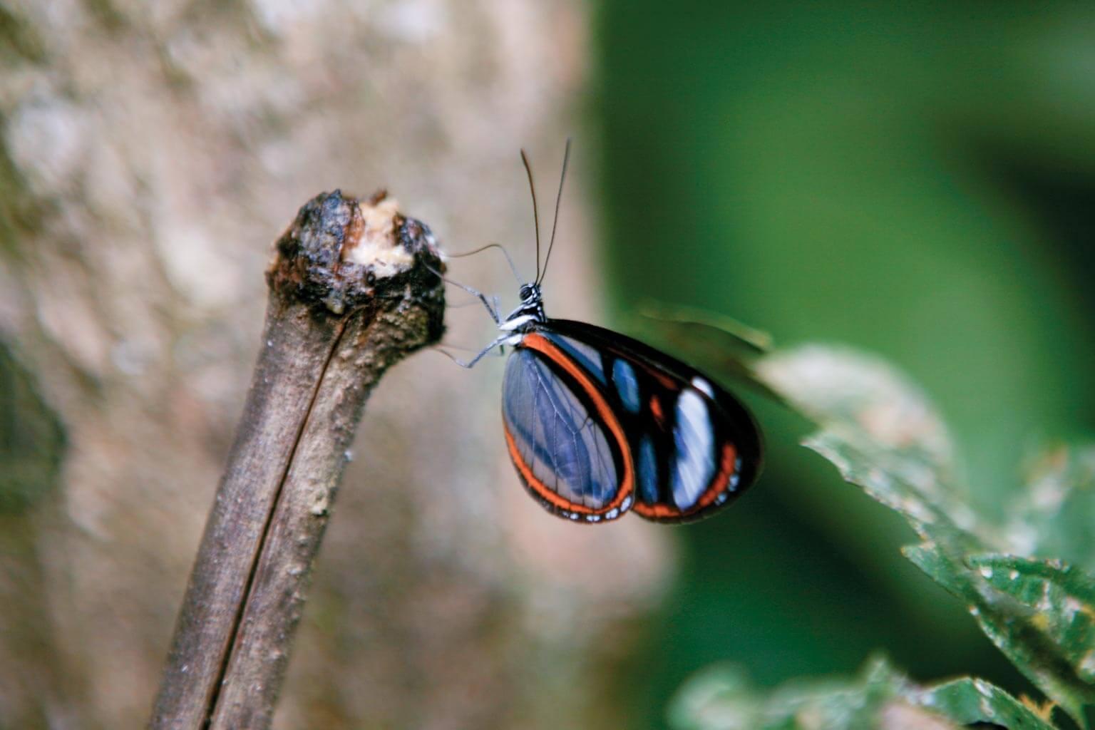 Resultado de imagen para inkaterra butterfly house