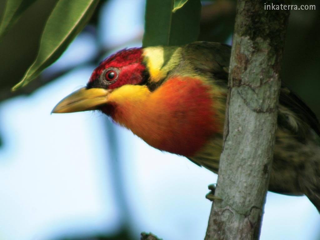 Inkaterra Reserva Amazónica
